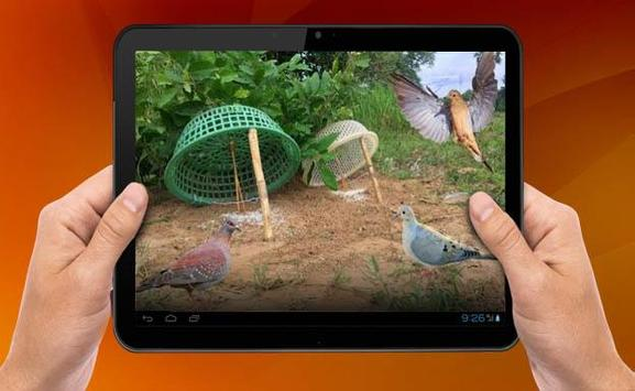 Bird Trap apk screenshot
