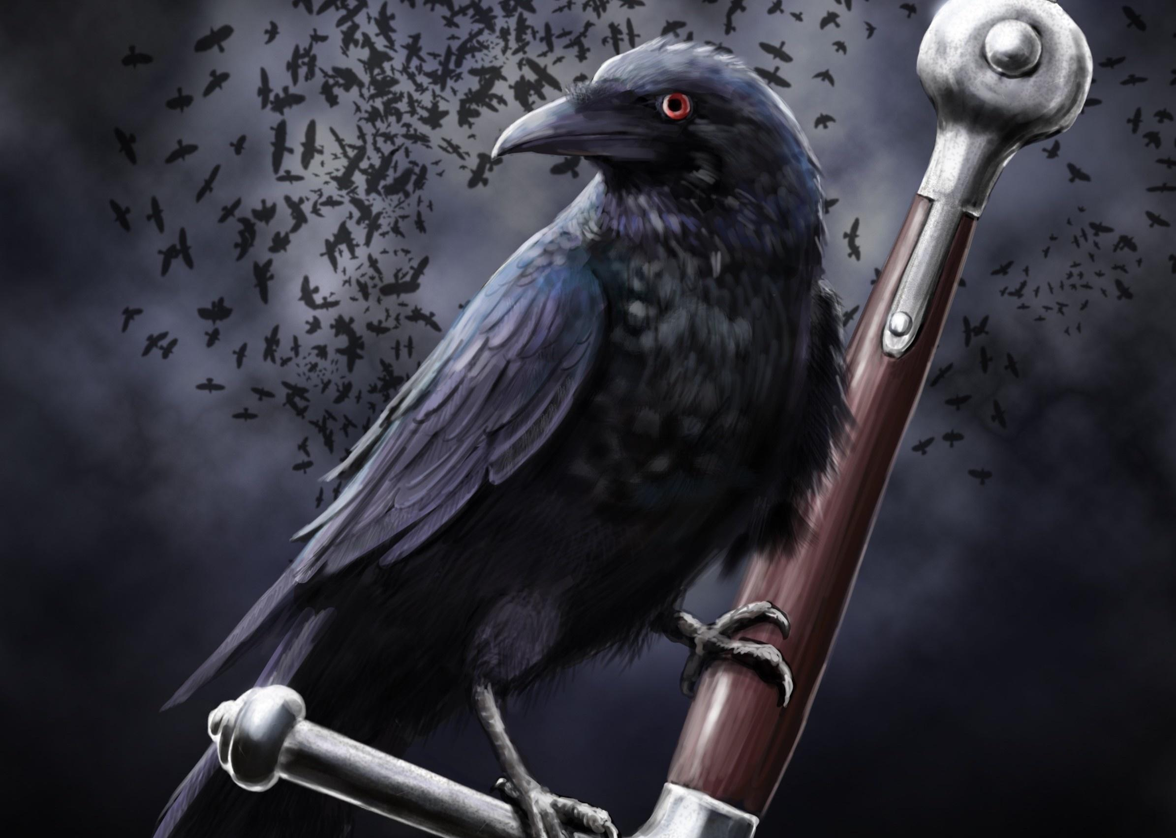 Crow Live Wallpaper For Android Apk Download