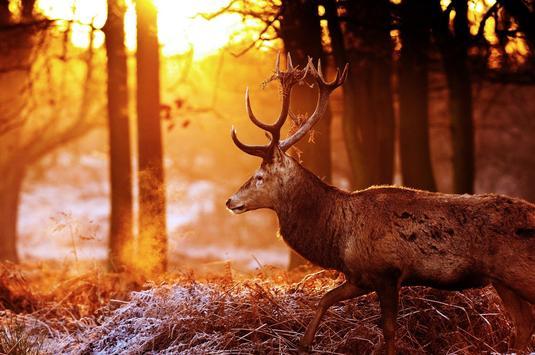 Deer Live Wallpaper poster
