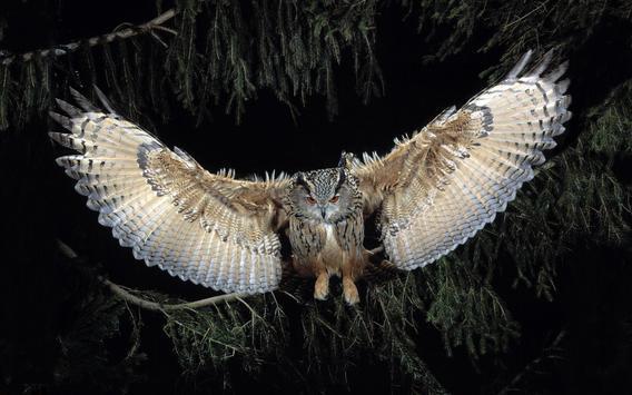 Owl Live Wallpaper poster