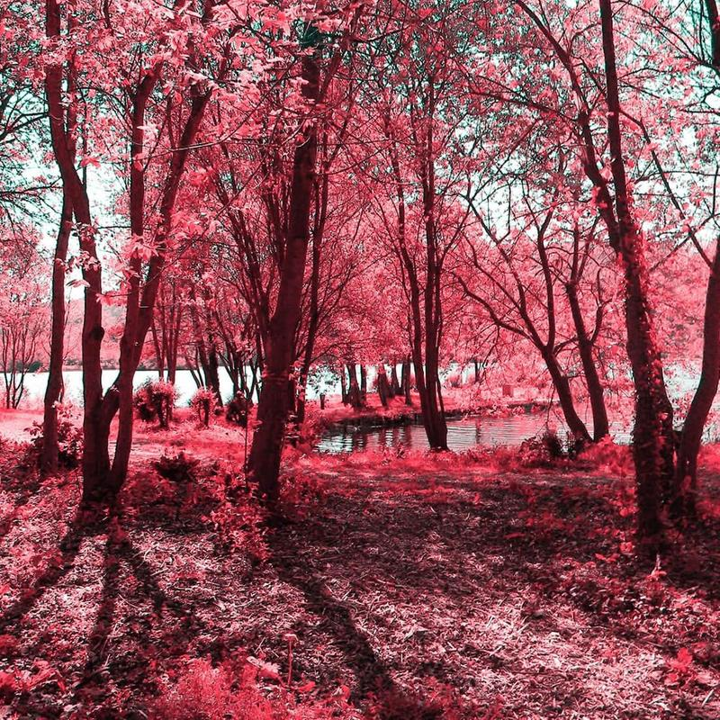 Pink Forest Live Wallpaper For Android