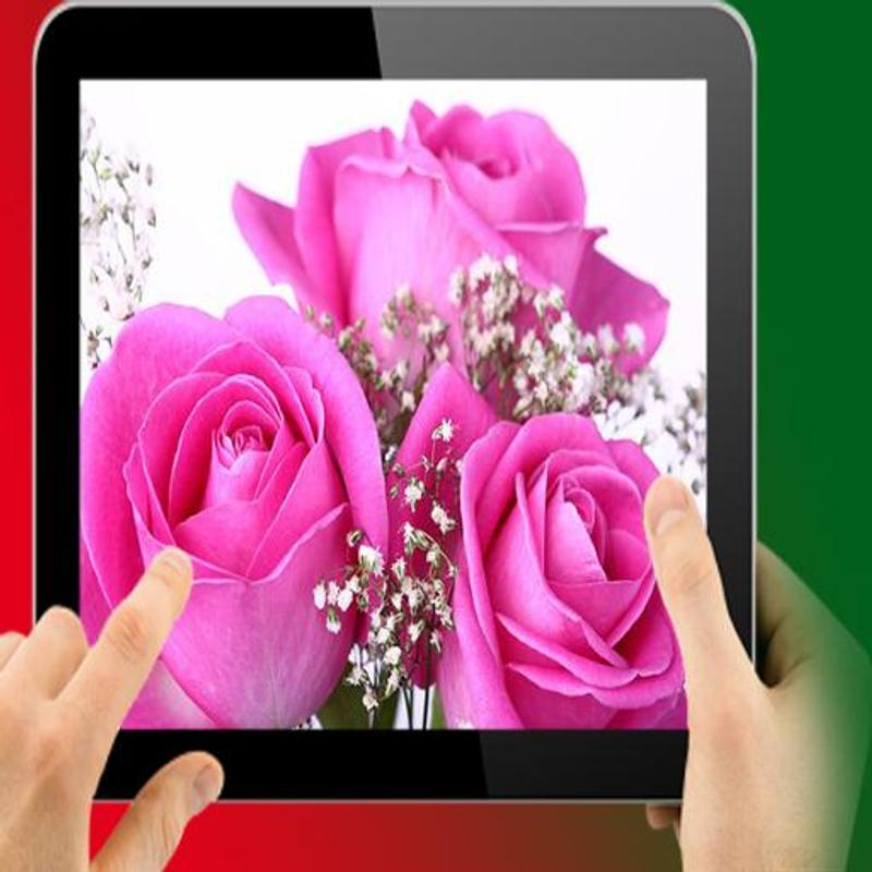 Beautiful Pink Rose Wallpaper Hd For Android Apk Download