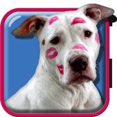 Pitbull Dog Live Wallpaper icon