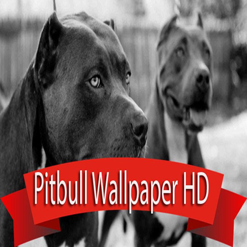Pitbull wallpaper hd apk pitbull wallpaper hd voltagebd Choice Image