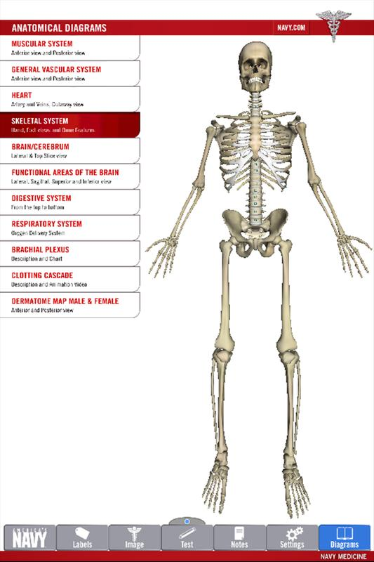 Anatomy Study Guide APK Download - Free Medical APP for Android ...