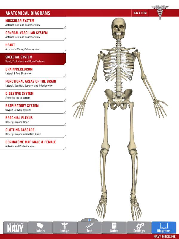 Anatomy Study Guide Apk Download Free Medical App For Android
