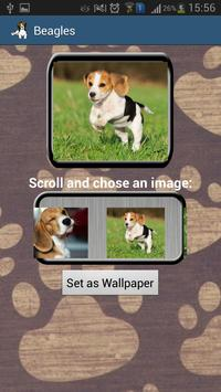 Beagles Wallpapers & Info apk screenshot