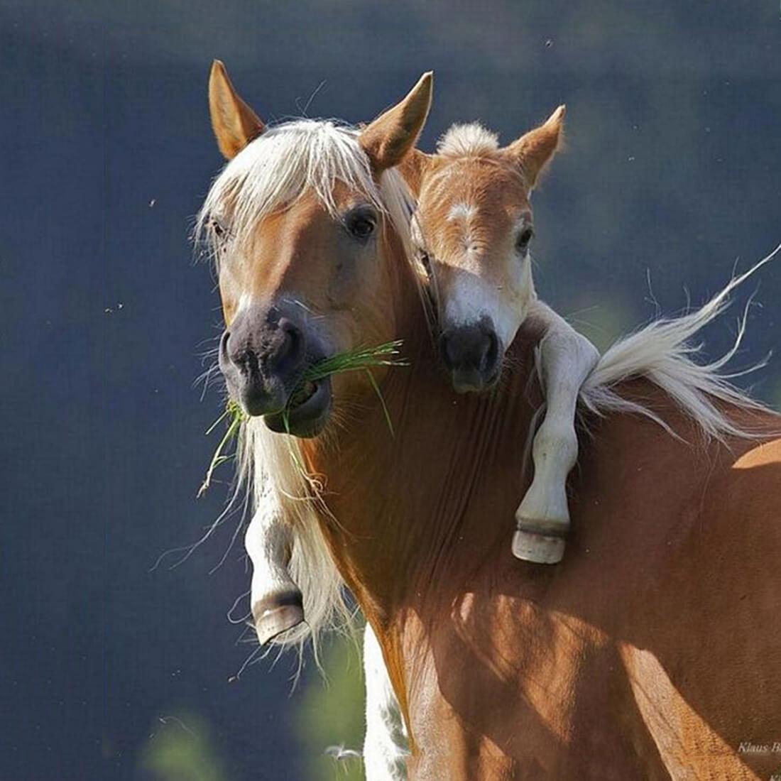 можете классная картинка с лошадью успех этого