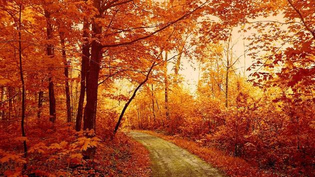 Autumn Wallpaper screenshot 4