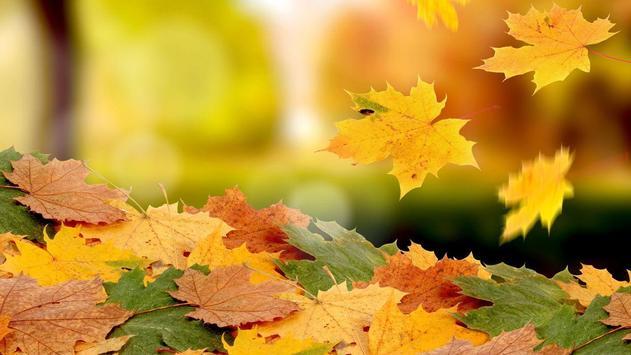 Autumn Wallpaper screenshot 5