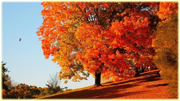 Autumn Wallpaper screenshot 7