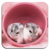 Hamster Wallpaper Ultra HD Quality icon