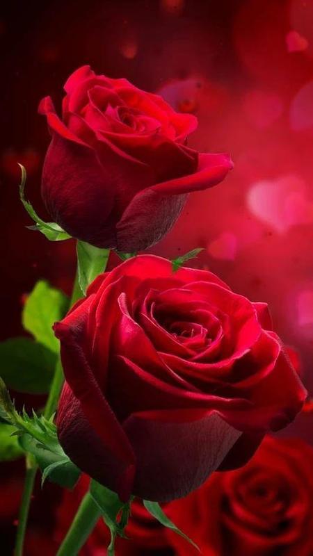 Imagenes De Flores Rojas Gif For Android Apk Download
