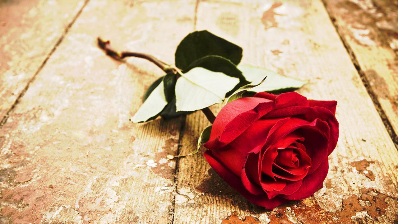 Картинка прощальные розы