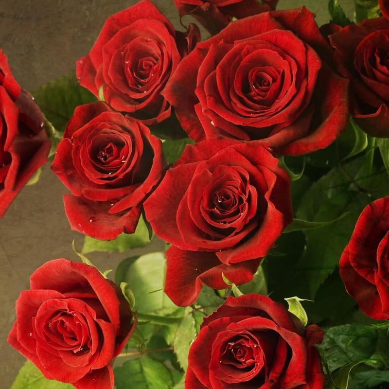 Rosa Vermelha Papel De Parede APK Baixar