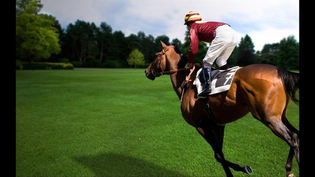 Horse Racing. Sport Wallpapers screenshot 1