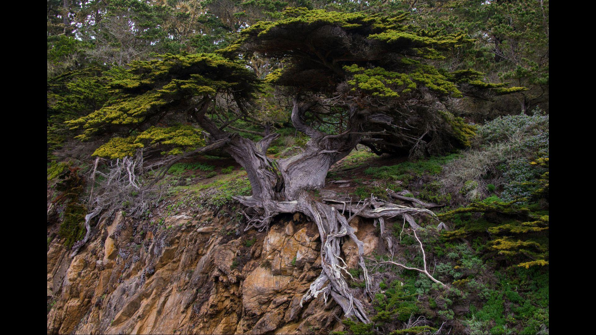 Tree Root Top Rated Wallpapers For Android Apk Download