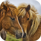 Horses. Animal Wallpapers icon