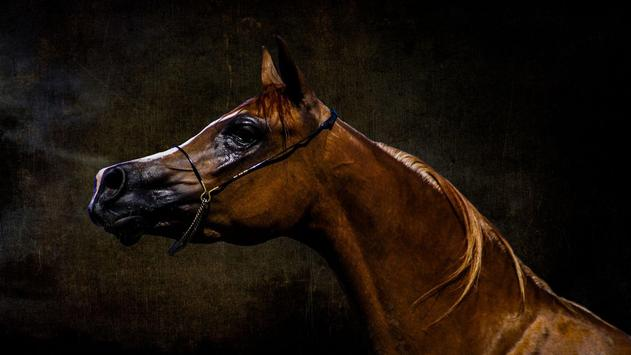 Horses. Animal Wallpapers poster