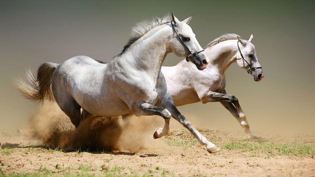 Horses. Animal Wallpapers screenshot 2