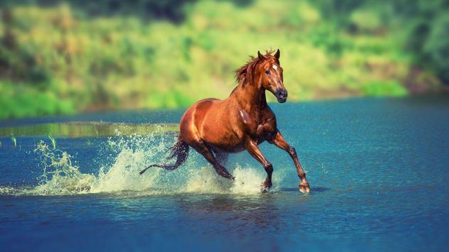 Horses. Animal Wallpapers screenshot 3