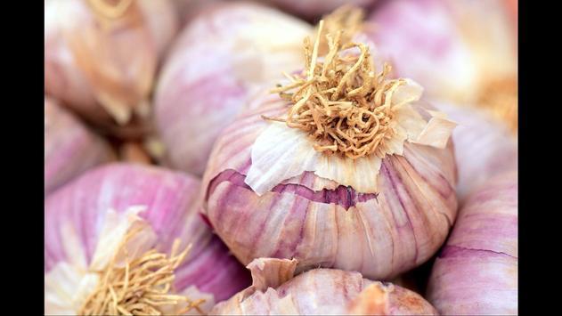 Garlic. Nature Wallpapers screenshot 1