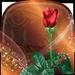 Rosas Fondos Animados 🌹 Imagenes Bonitas