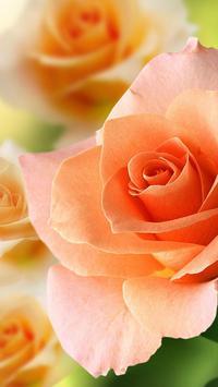 Roses Live Wallpaper screenshot 3