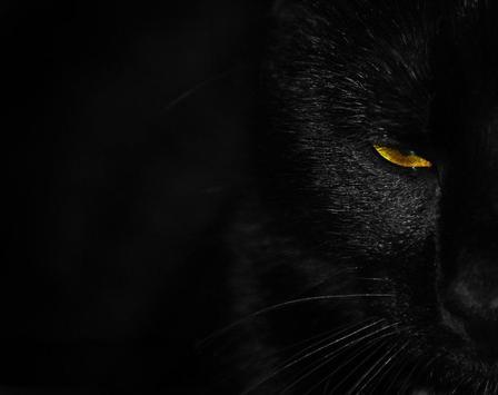 Black Panther Live Wallpaper poster