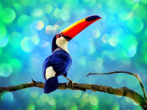 Toucan Bird Live Wallpapers apk screenshot