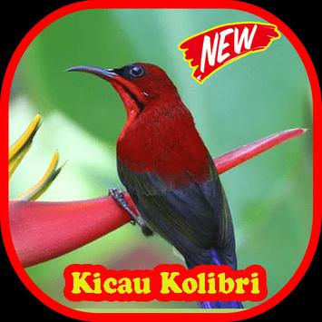 Kicau Kolibri Merah HD poster