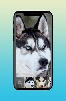 Husky Adorable Pet Siberian Dog App Lock poster