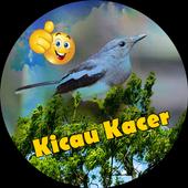 Suara Burung Kacer Terlengkap icon