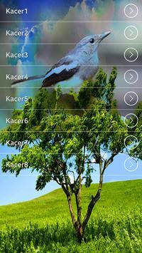 Suara Burung Kacer Terlengkap apk screenshot
