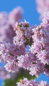 Lovely lilac. Flower Wallpaper poster