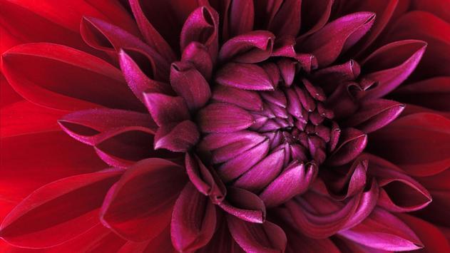 Beauty flowers. Live wallpaper poster