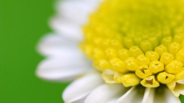 Beauty flowers. Live wallpaper apk screenshot