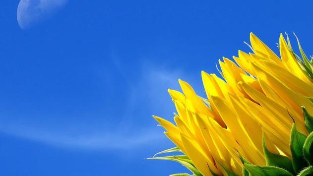 Beauty flowers. Live wallpaper screenshot 2