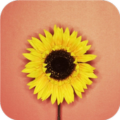 Single flower. Live wallpapers icon