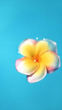 Single flower. Live wallpapers apk screenshot