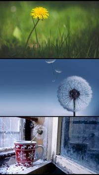 Stranger dandelions. Wallpaper poster