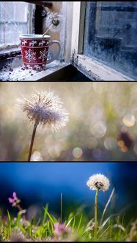 Stranger dandelions. Wallpaper apk screenshot