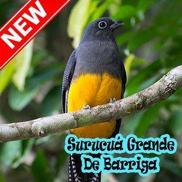 Cantos De Surucua Grande Mp3 bài đăng