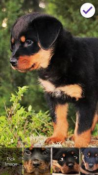 Smart Rottweiler Dog Little Puppies Screen Lock apk screenshot