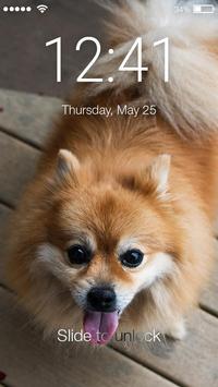 Pomeranian Spitz Cute Dog Screen Lock poster