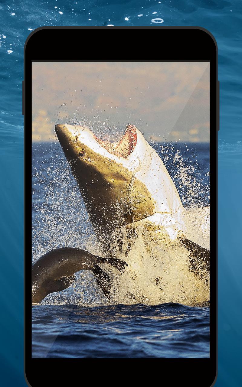 Requin Hd Fond D écran Animé Pour Android Téléchargez L Apk