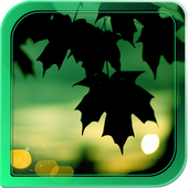 Silhouette Live Wallpapers icon
