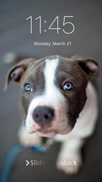 Pitbull Nice Dogs Wallpaper Lock Screen poster