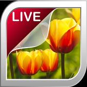 Tulip Live Wallpaper icon