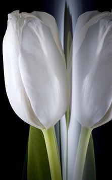 Tulip Live Wallpaper screenshot 5